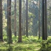 WWF określa SCA jako przykład firmy zrównoważonego rozwoju